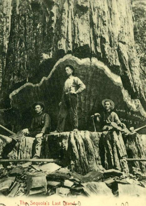 redwood-logging