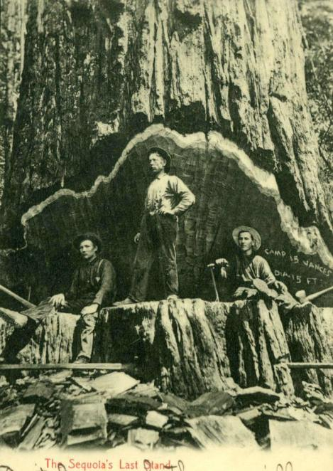 redwood logging History of Drury & French in early Humboldt