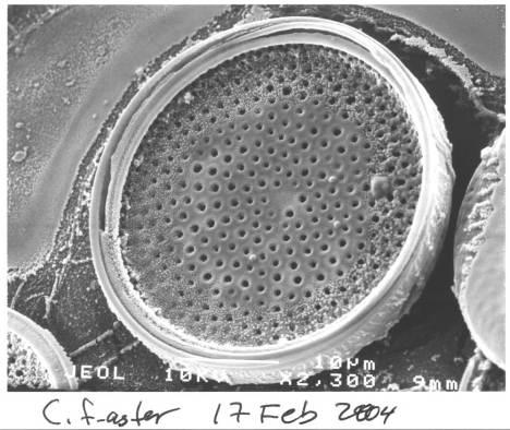 diatoms3a