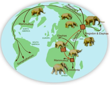 elephant-around-world