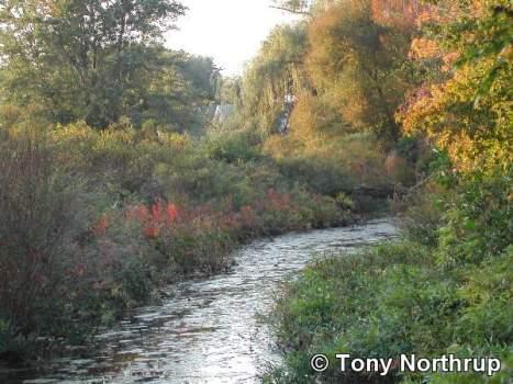 charles-river-in-watertown5